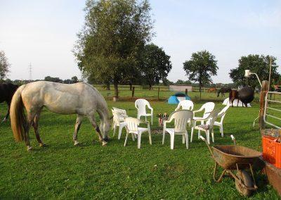 Gezinsweekend tussen de paarden - kampvuur