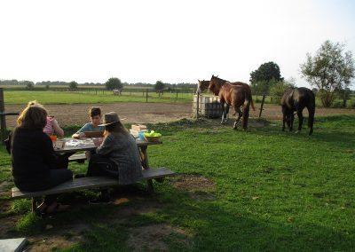 Gezinsweekend tussen de paarden - spelletjes spelen