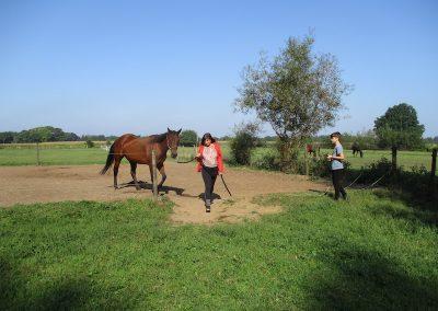 Gezinsvakantie met paarden. Moeder zoon.
